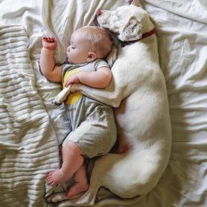 Ребенок и домашнее животное. Какого питомца стоит заводить?