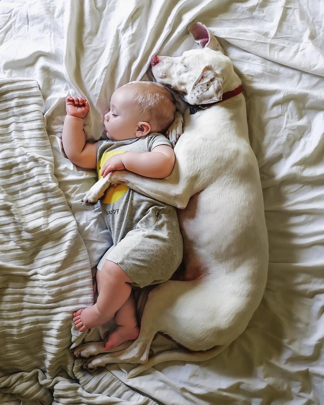 Ребенок и домашнее животное. Какого питомца стоит заводить? post thumbnail